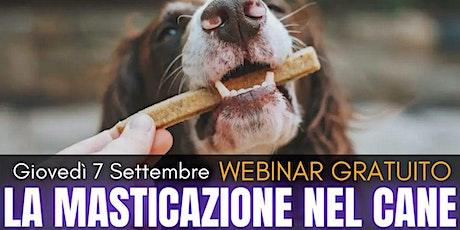 La Masticazione nel cane - WEBINAR GRATUITO tickets