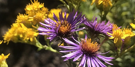 Wildflower Walk at Alfred Caldwell Lily Pool, Lincoln Park, Chicago tickets