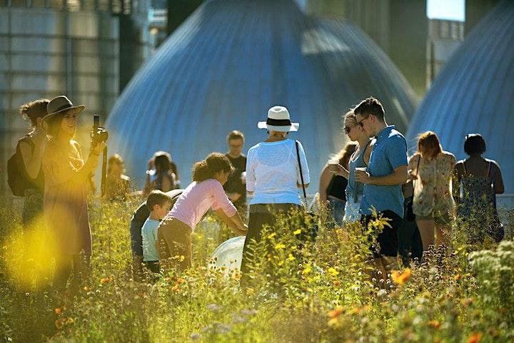 5th Annual Kingsland Wildflowers Festival image