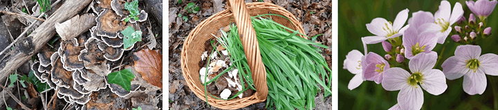 Introduction to Foraging image