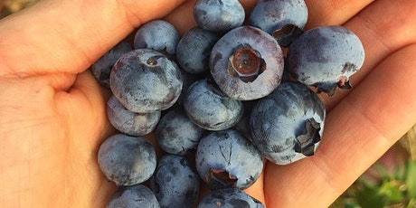 Blooming Market and U Pick Blueberries tickets