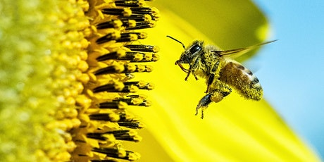 Fantastic Flowers and the Creatures that Pollinate Them tickets