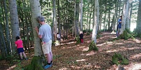 Marche avec les arbres & bain de forêt La Féclaz billets
