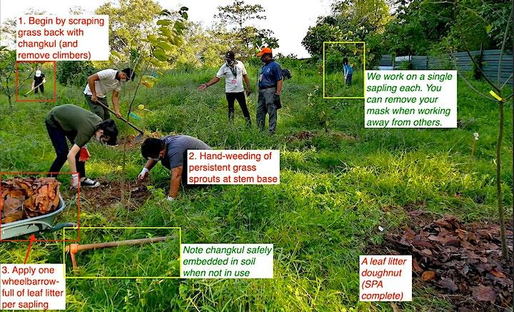 Sapling Protection Action (SPA) at Kranji Coastal Nature Park image