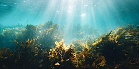 International Joint Talk Series 3: Seaweed Culture tickets