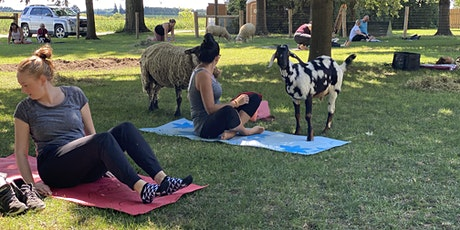 Goat Yoga & Tour Sunday August 15 at 1130am tickets