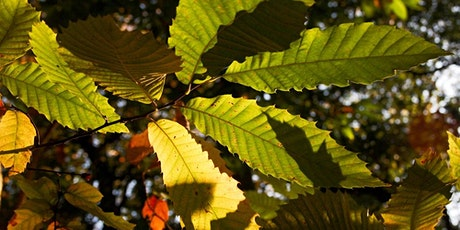 Forest Bathing+ Experience - Mindfulness in Nature at Ashridge Estate tickets