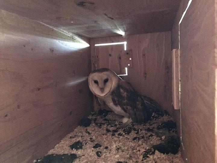 Owl Workshop image
