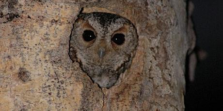 Owl Workshop tickets