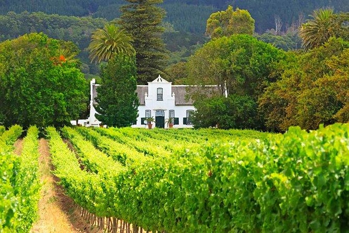 Dutch & South African wine dinner with 238 Grill & Springbok Wines image