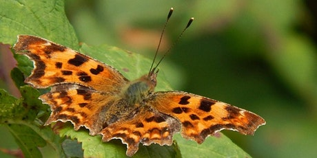 Natural Mindfulness - The Beauty of Butterflies tickets