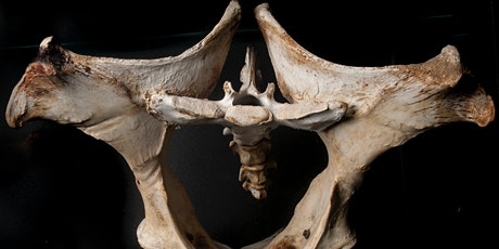 The Equine Sacroiliac Joint Region in Gait, Assessment and Rehabilitation Tickets