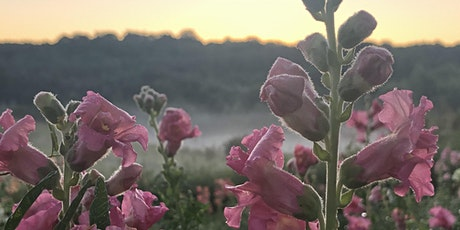 Sunset Yoga in the Flowers - with Andrea Caruso - August 5 tickets