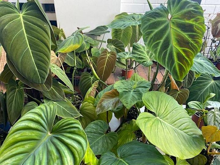 Urban Plant Hunters Market image