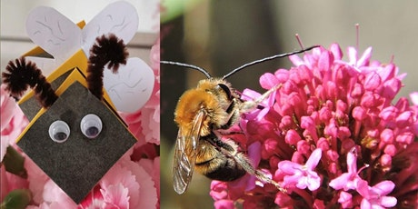 Buzzy Bees Craft Swanage Library tickets