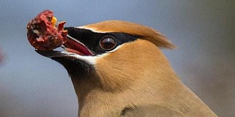 August 29 | 2:00 pm – 4:30pm | Bird Photography Workshop tickets