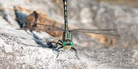 Identifying and Appreciating Dragonflies tickets