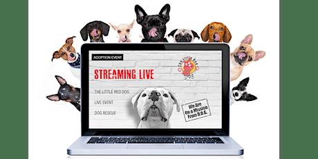 Mimosa Brunch Adoption Event - Find Your Pal Online tickets