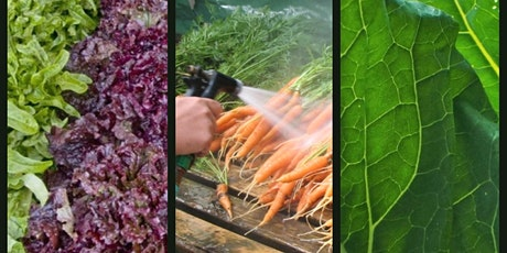 Post Harvest Considerations for Small-Scale Vegetable/Fruit Production tickets