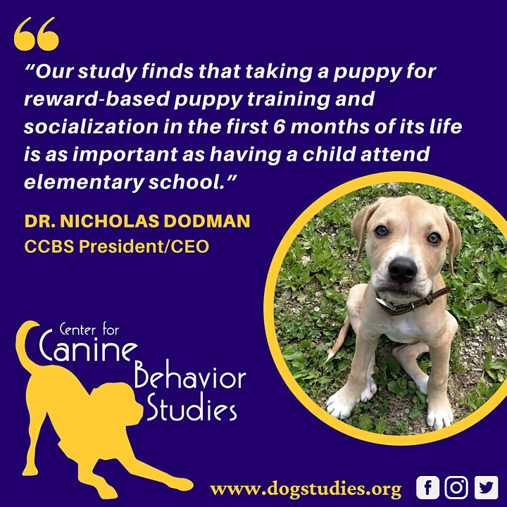 All About Puppies: Q&A with Dr. Dodman and the CCBS Team image