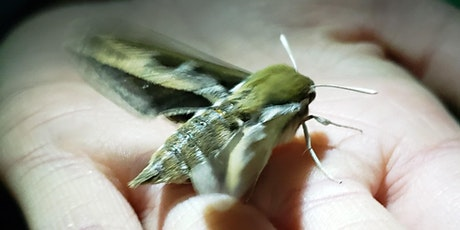 Fly By Night: Moth-lighting in the Weaselhead tickets
