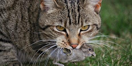 Feral cat management workshop tickets