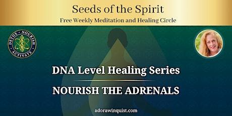 Seeds of the Spirit DNA Healing: Nourish the Adrenals Tickets