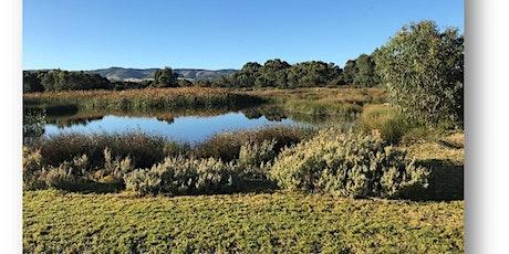 Wetlands tour - Aquatic plants discovery tickets