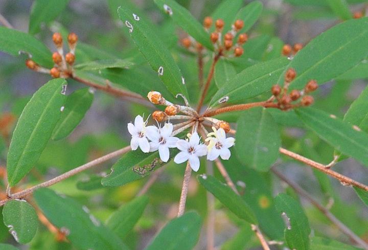 Noosa National Park Wildflower Walk image