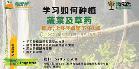 Learn how to grow Vegetables and herbs 学习如何种植 蔬菜及草药 21 Aug tickets