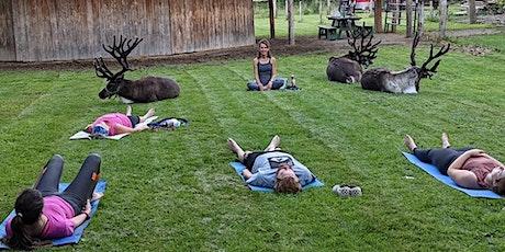 Yoga At The Reindeer Farm tickets