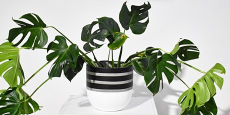 Happy House Plant Workshop No.2 tickets