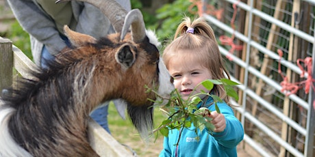 FREE Woodland Wonders Family Day for families who receive free school meals tickets