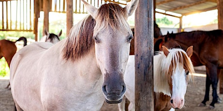 Children's summer session with our herd of horses tickets