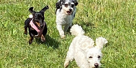 SMALL BREED  PLAY AND SOCIALISATION tickets