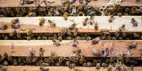 Getting Your Hive Through Winter tickets