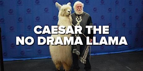 Pet Caesar the No Drama Llama at Hemp Bar - Llama Days of Summer tickets