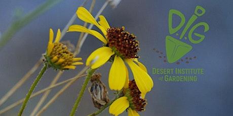 DIG ONLINE: The Wonders of Arizona Wildflowers tickets