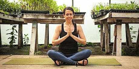 Beginner Friendly Alignment Yoga tickets