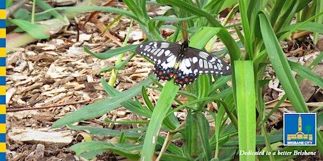 Bush Kindy Special - Butterfly Fun! tickets