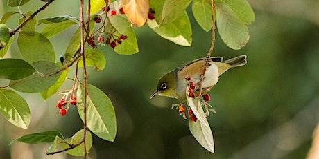 Bird Life Observation Walk at  Rippon Lea Estate tickets