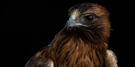 Birds Of Prey Studio Photography Workshop - VIC tickets