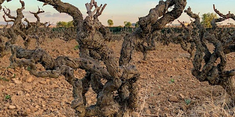 Old Vines Masterclass tickets