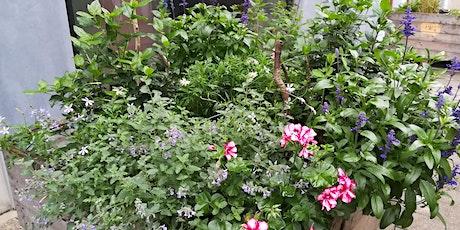 Infosessie 'Wat plant ik in mijn bloembak?' tickets