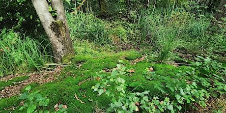 Bosbaden / Shinrin-Yoku / Forest Bathing - Natuurpark Wolfslaar, Breda tickets