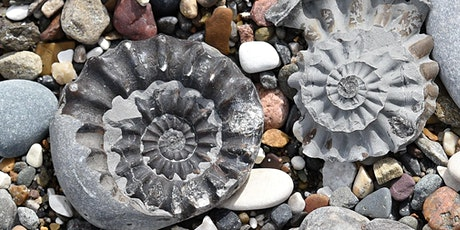 Coastal Explorers - Sand, Stone & Fossils tickets