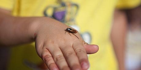 Bug Safari tickets