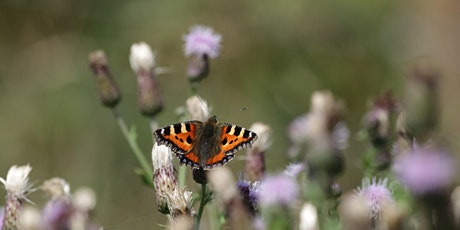Wildlife walk: record and ramble through Lunt Meadows - Wednesday 28th July tickets