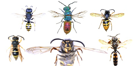 Tales from the Decant: The Weird World of Ireland's Stinging Wasps tickets