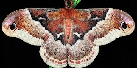 Meet the Moths of New Jersey tickets